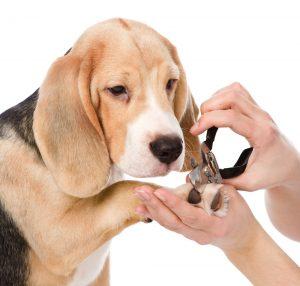 Pet Grooming at Bromhof Vet Clinic Randburg