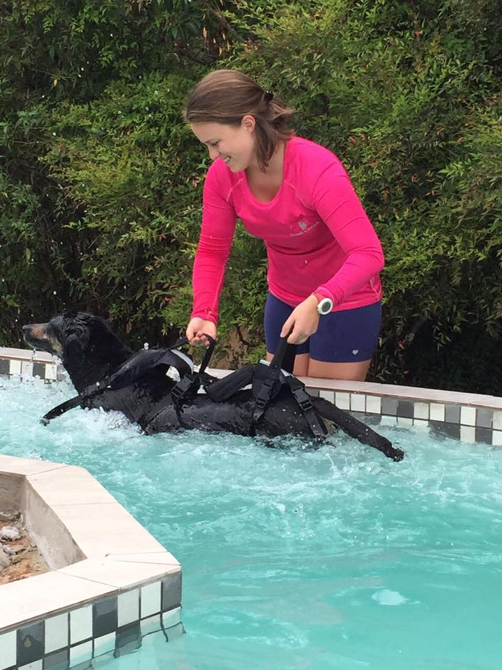 Hydrotherapy for pets at Bromhof Vet Clinic Randbrug